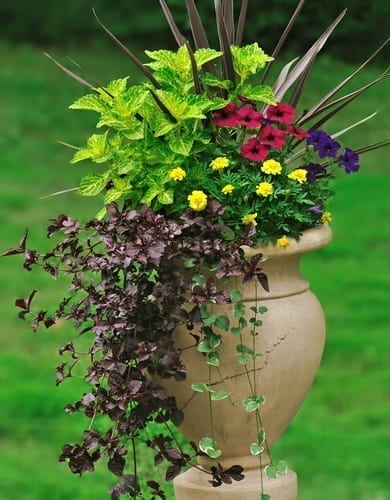 thrillers, fillers, and spillers for patio container planting