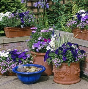 pretty container garden with assorted size pots and plants