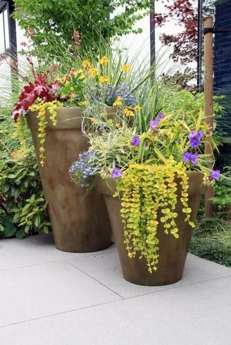 container gardening with thrillers, fillers and spillers