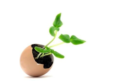 gardening tip plant cucumber seedling in eggshell