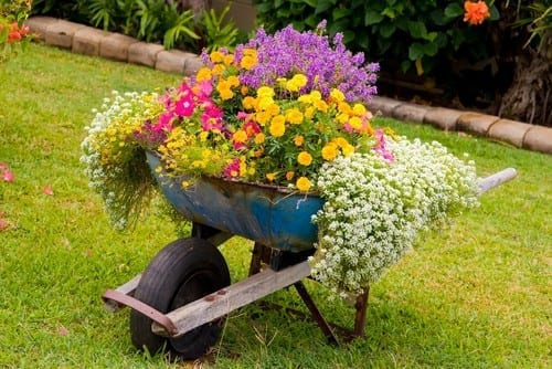 assorted flowers are planted in an old wheelbarrow and blooming