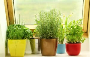 five herbs are planted in different color pots growing on a windowsill
