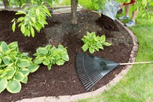 adding mulch around the garden beds with a rake