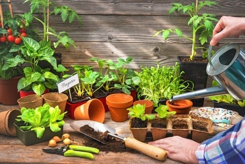 Best Vegetables To Plant In Containers