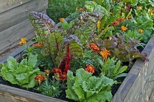 Vegetable Garden in Container