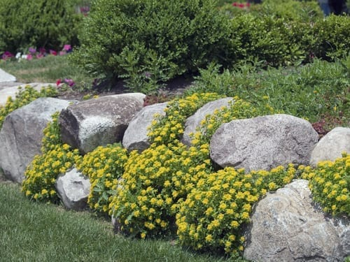 river rocks are piled up, covered with yellow flowers