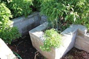 cinder block as garden edge and planter