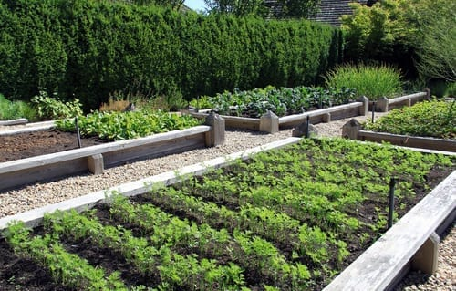 large raised garden beds planted with rows of vegetables