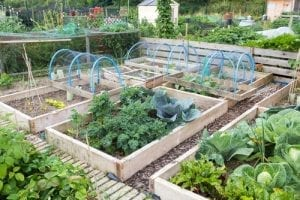 a garden with several raised garden beds and greenhouse hoops