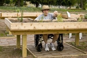 man in wheelchair is able to work in the raised garden bed