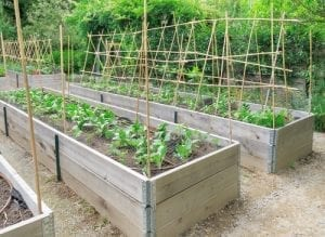 raised garden beds with trellis and plants growing
