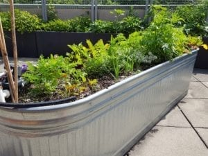 livestock tank turned into a gardening bed with plants in it