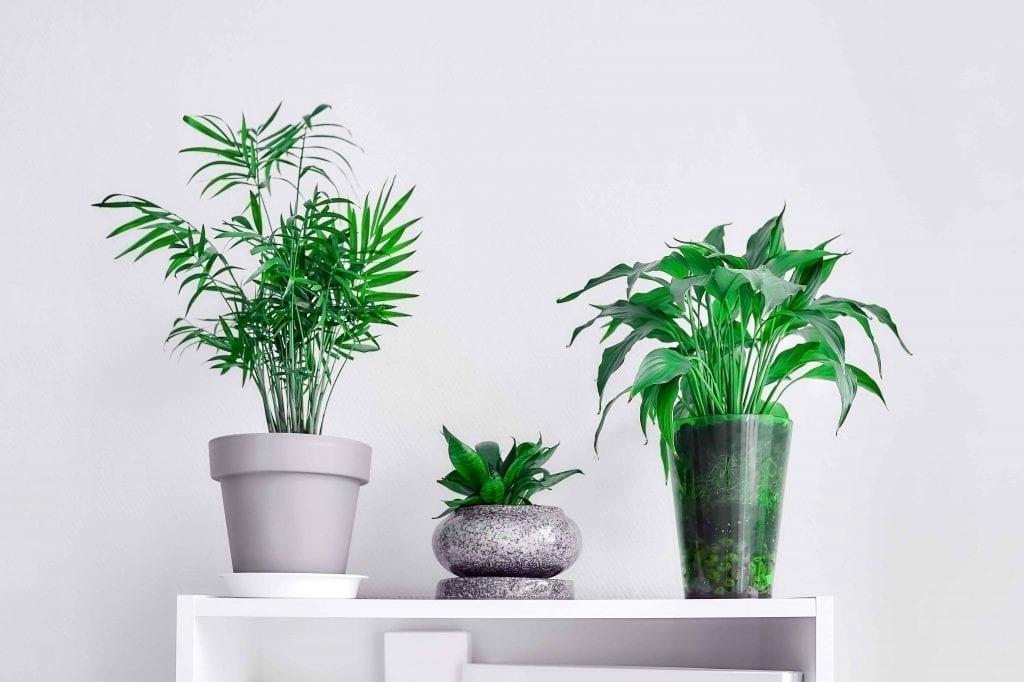 Three Flowerpots with Green Plants