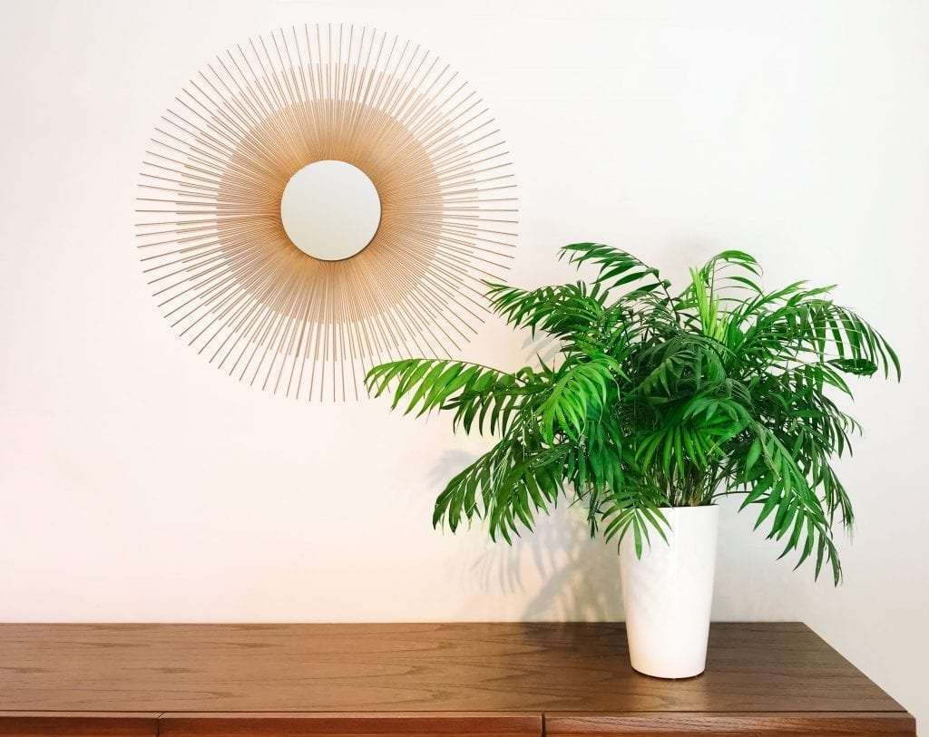 round-mirror-and-parlor-palm-plant-on-a-dresser-is a houseplant safe for pets