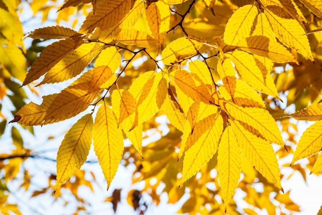 yellow leaves on the tree get ready and prep your garden for cold weather