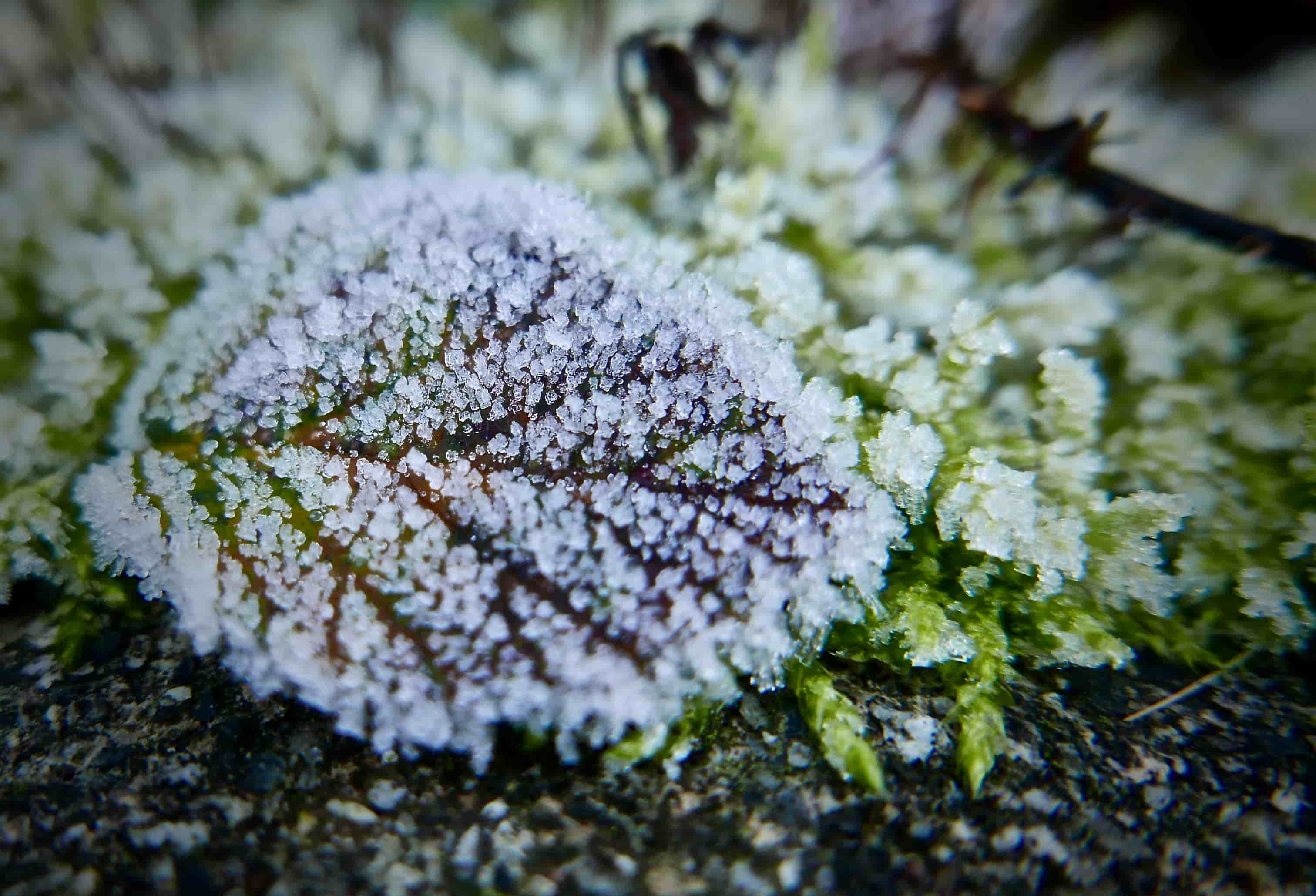 Leaf with frost prep you garden for cold weather