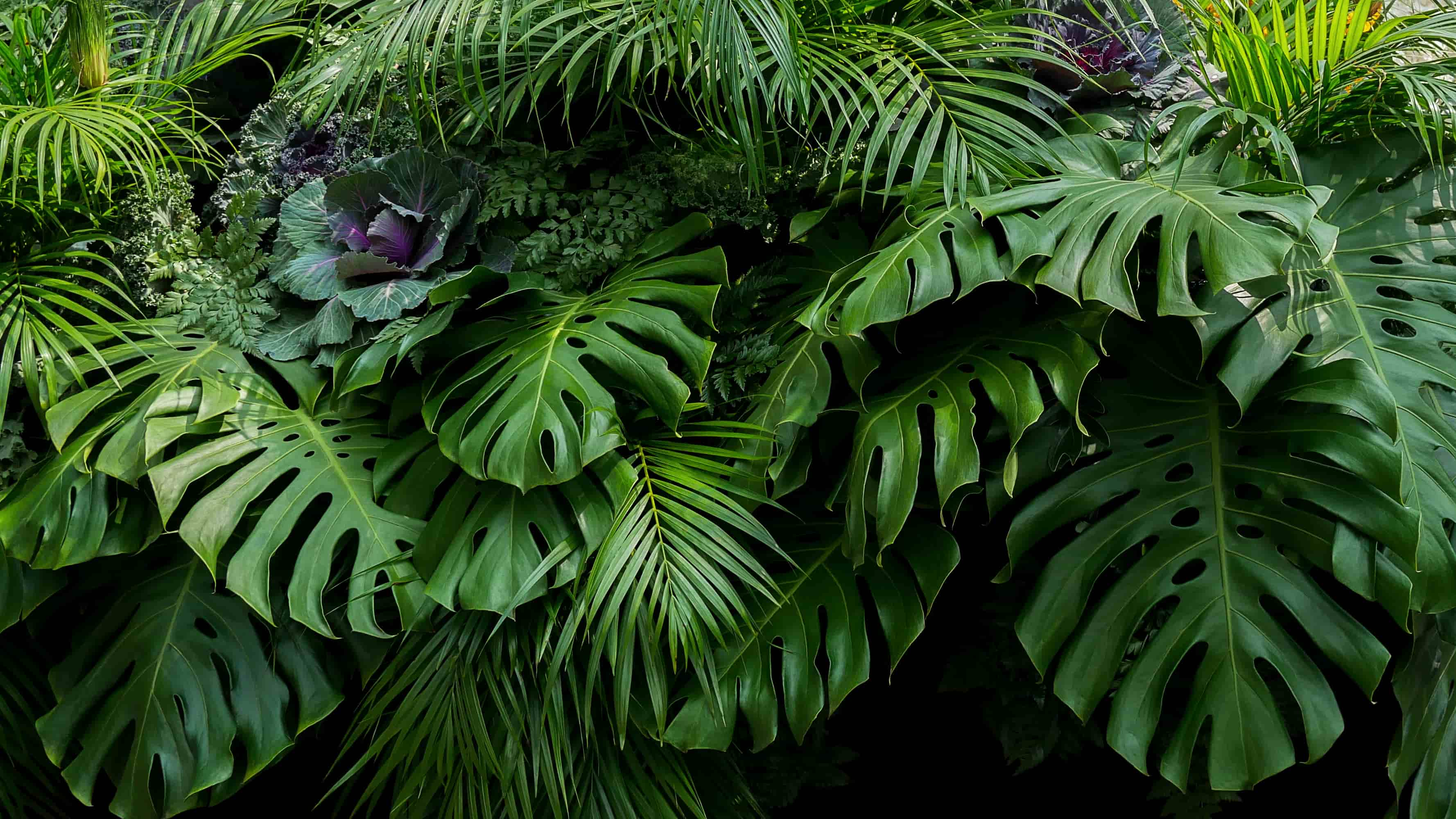 favorite plants for low light conditions