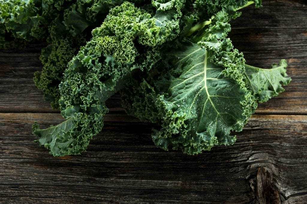 two kale leaves picked from the fall garden on dark background