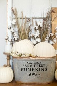 farmhouse bucket with white pumpkins, cotton stalks and sign