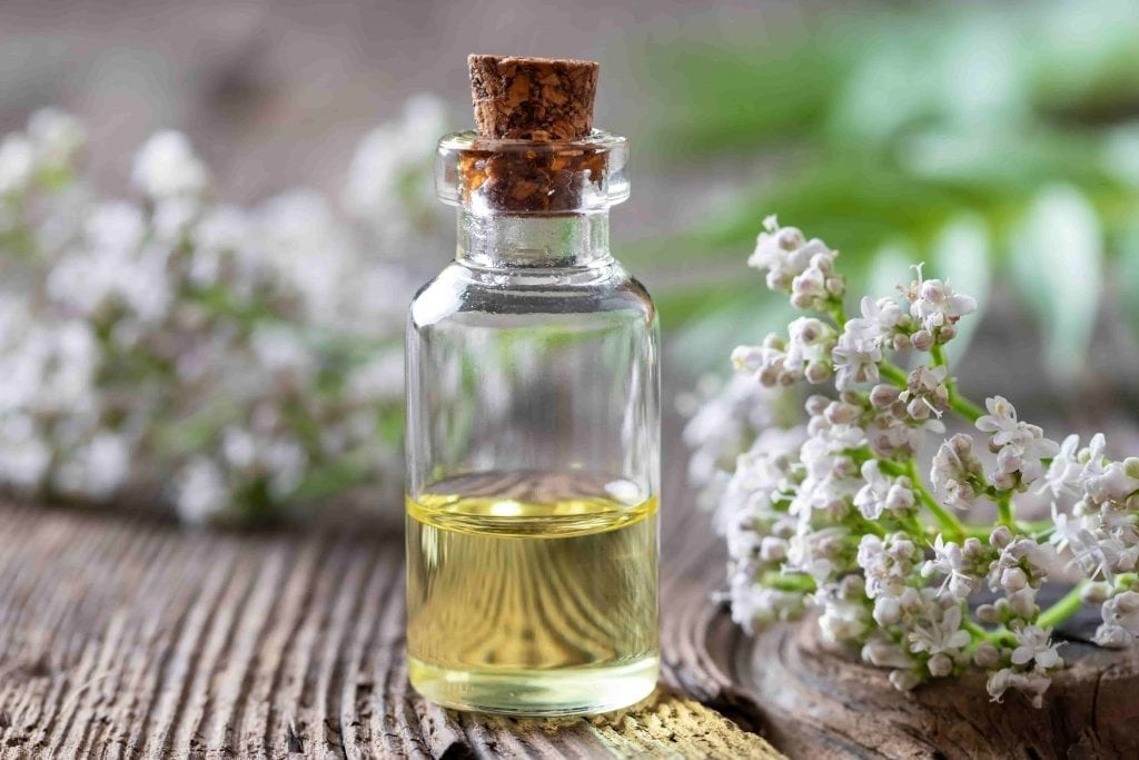 plants cure insomnia with valerian flower and valerian essential oil in bottle