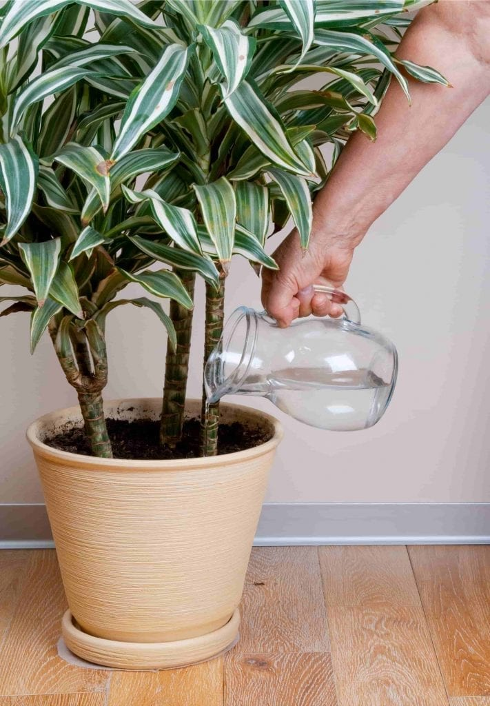 A person watering their plant indoors