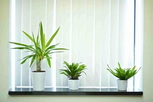 three white pots with plants on windowsill