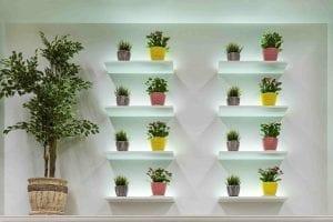 plants in pots on shelf on white wall