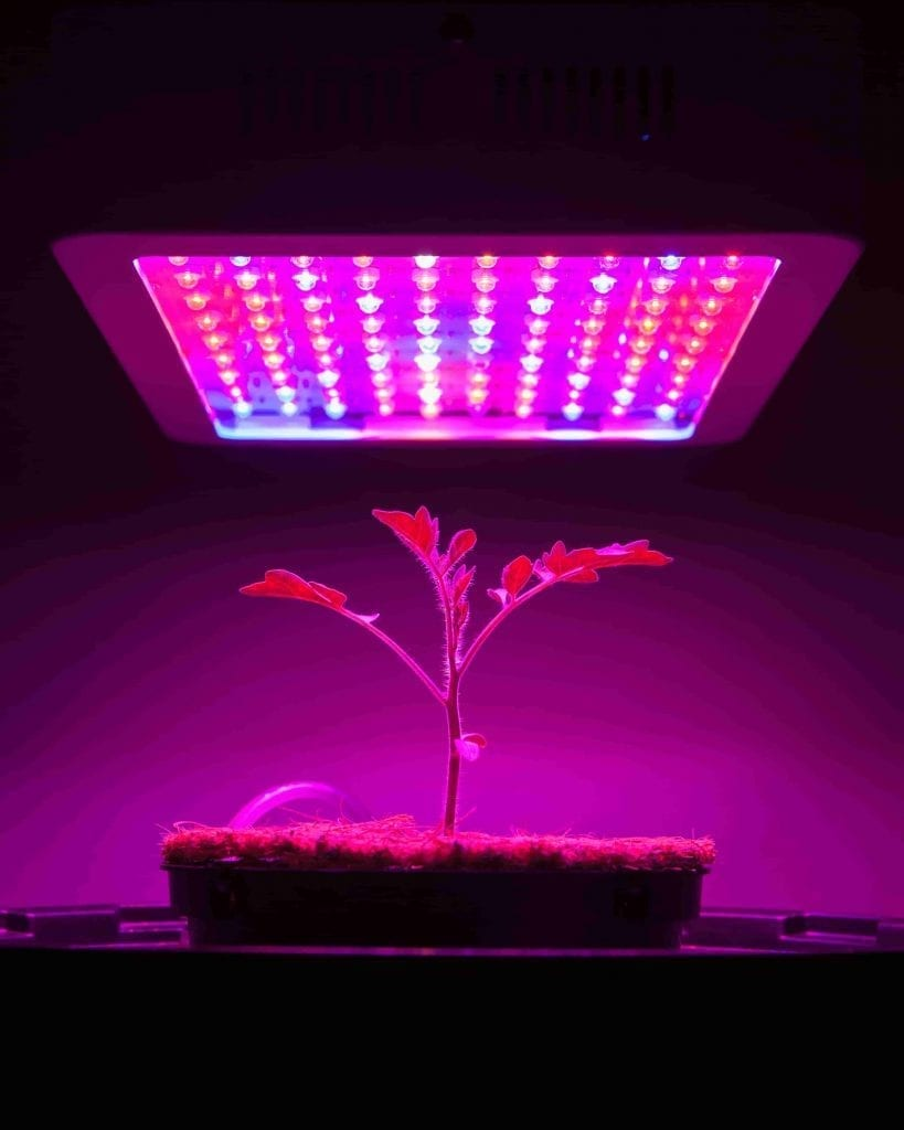 young tomato plant under LED grow light makes a perfect gift for gardeners