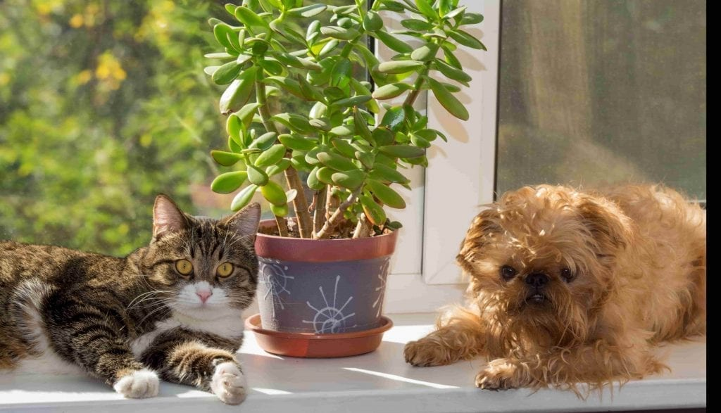 Plants can poison pets dog and cat with plant on windowsill