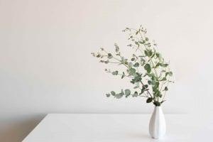 eucalyptus leaves in vase on table