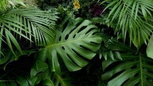 Green tropical leaves Monstera, palm, fern and ornamental plants backdrop background-