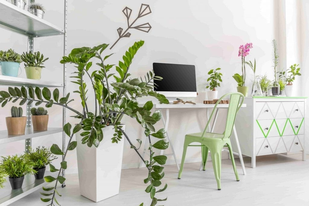 Easy care houseplants in a bright, minimalist interior