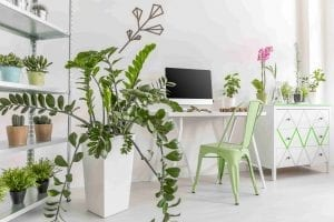 Easy care houseplants in a bright, minimalist interior