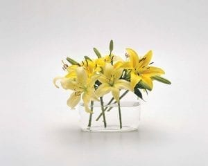 yellow lilies in clear vase