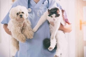 dog and cat visiting the vet