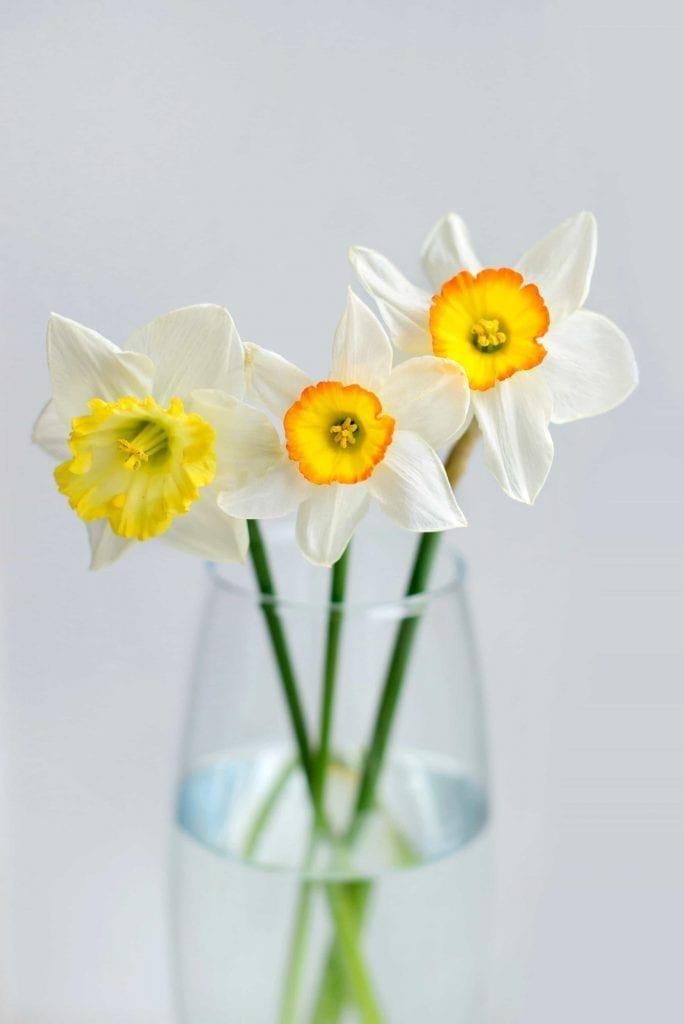 White Narcissus in the Glass Vase