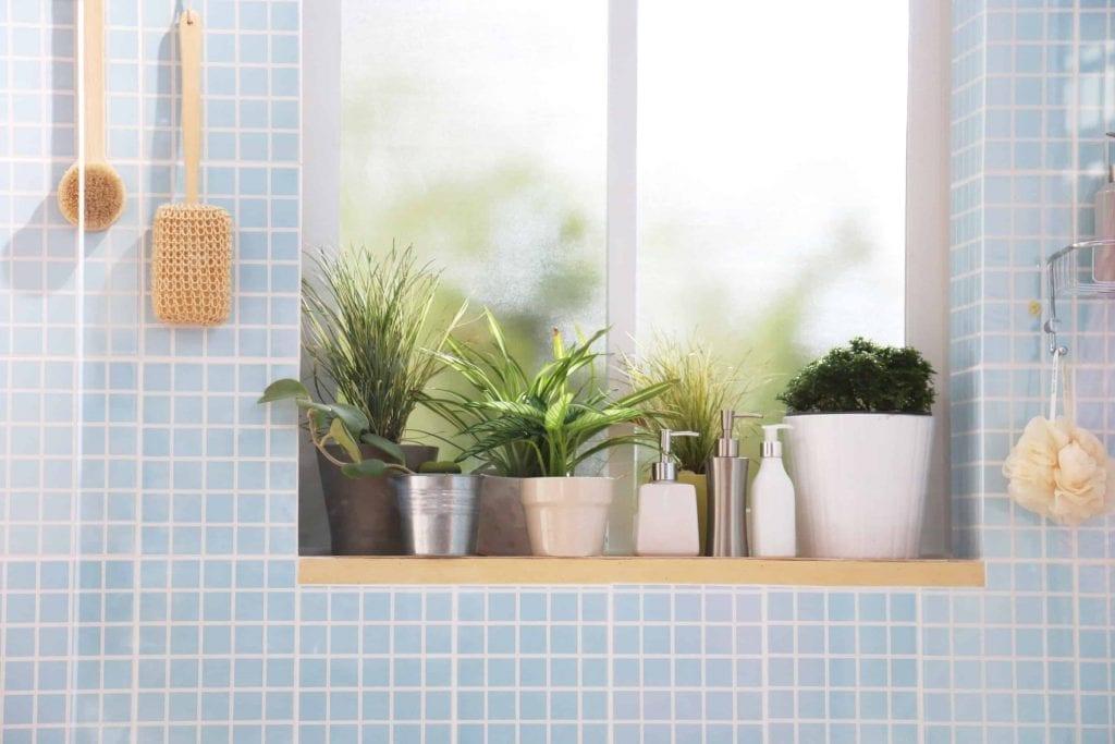houseplants in a bathroom on windowsill