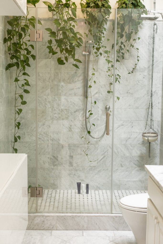 philodendron trailing down wall in bathroom shower