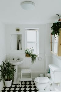 houseplants that love bathrooms white bathroom with several green plants by sink window and toilet