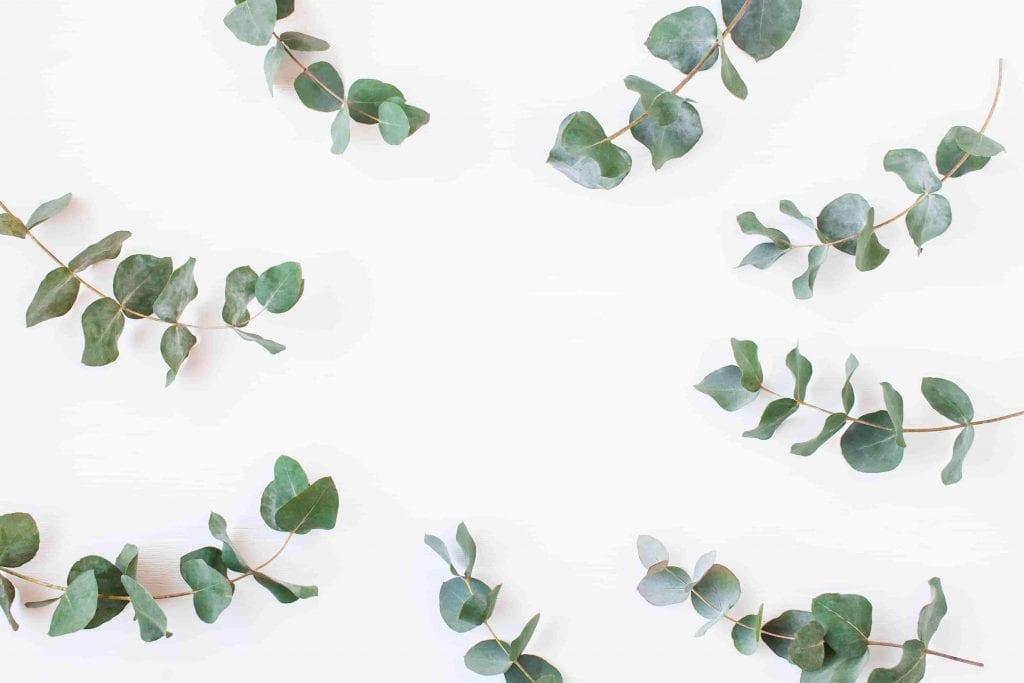 eucalyptus branches smell good