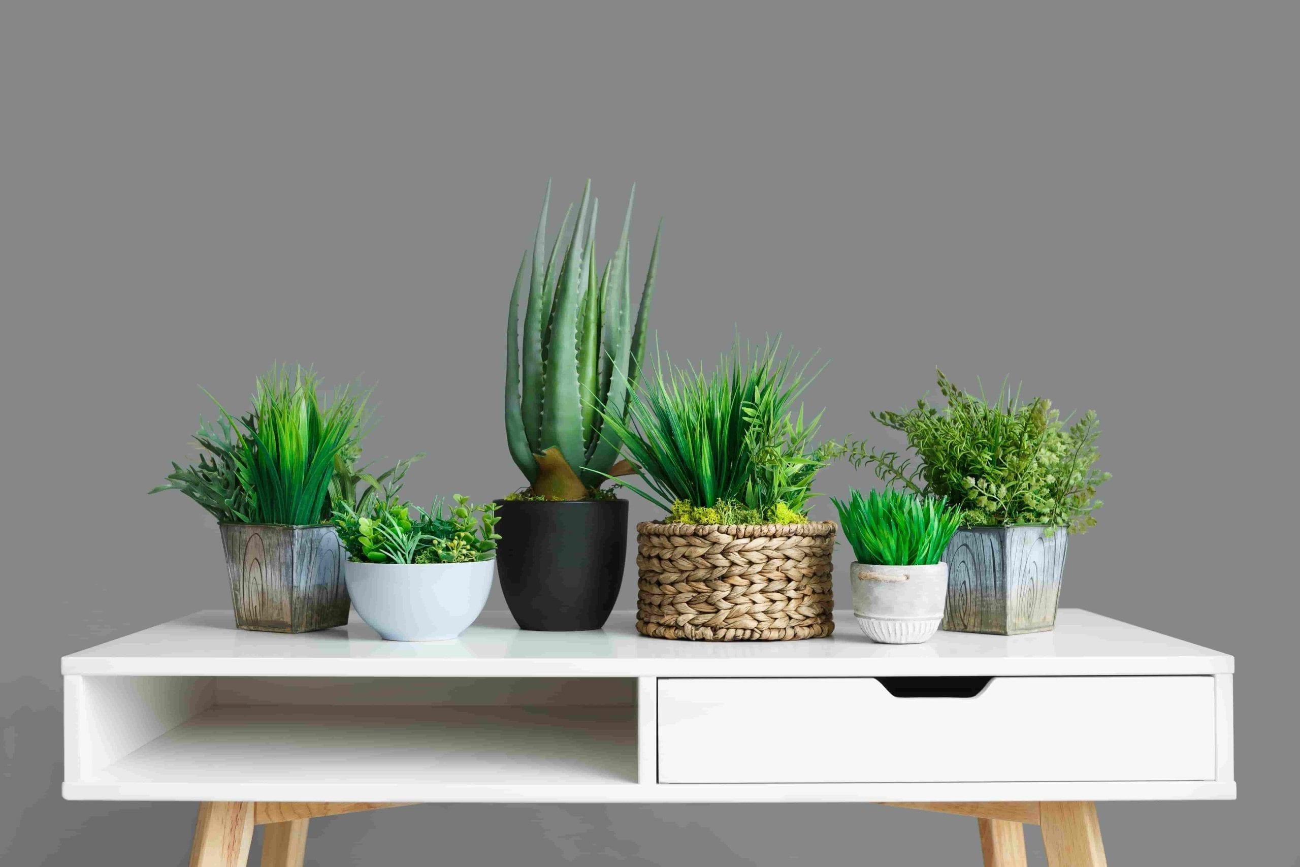 houseplants for beginners on white desk