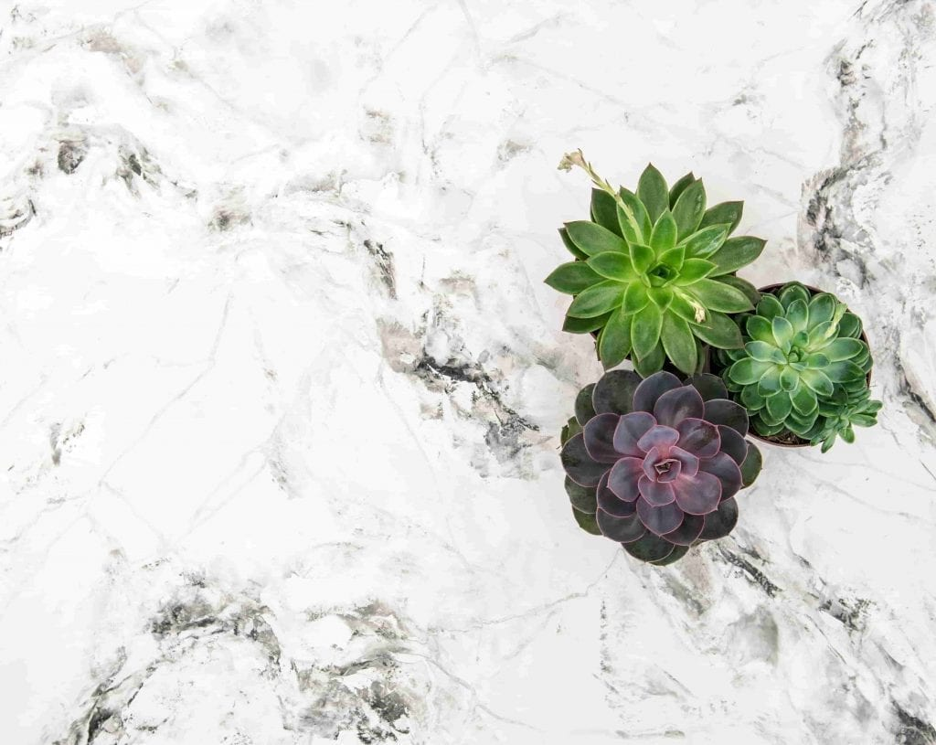 three succulents on white and gray marble