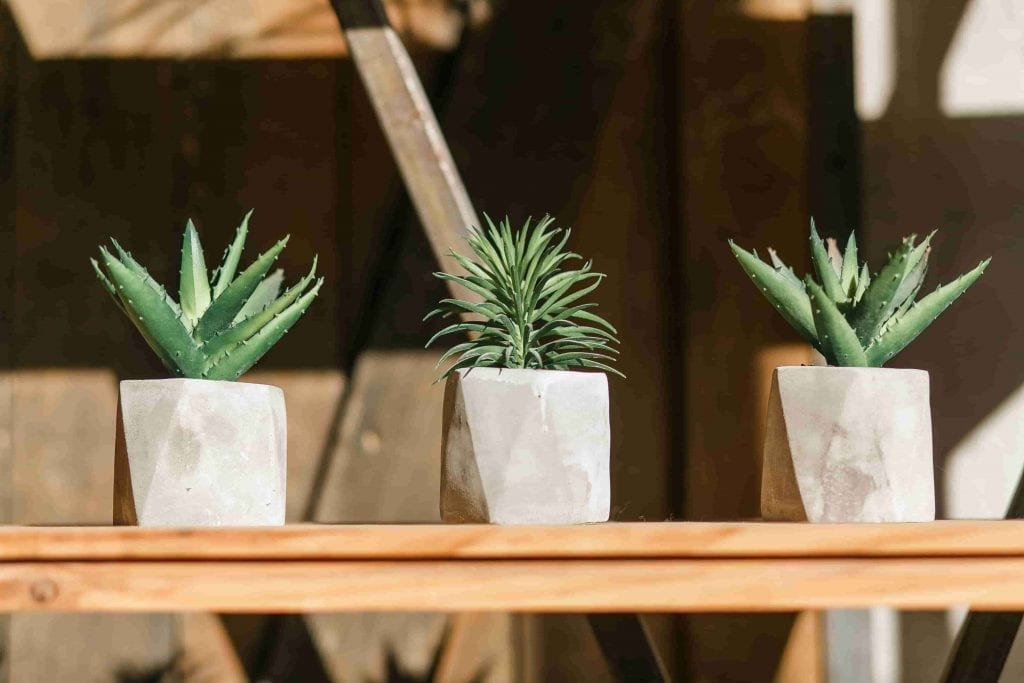 succulents three in pots on wooden shelf