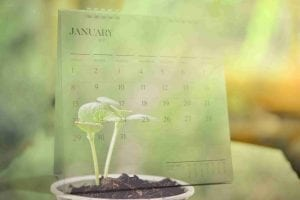 Double exposure Calendar with plants growing on nature background