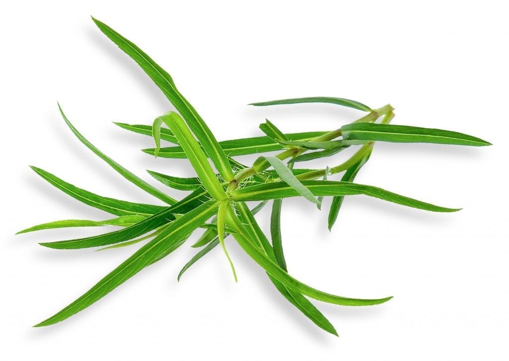 French tarragon isolated on white