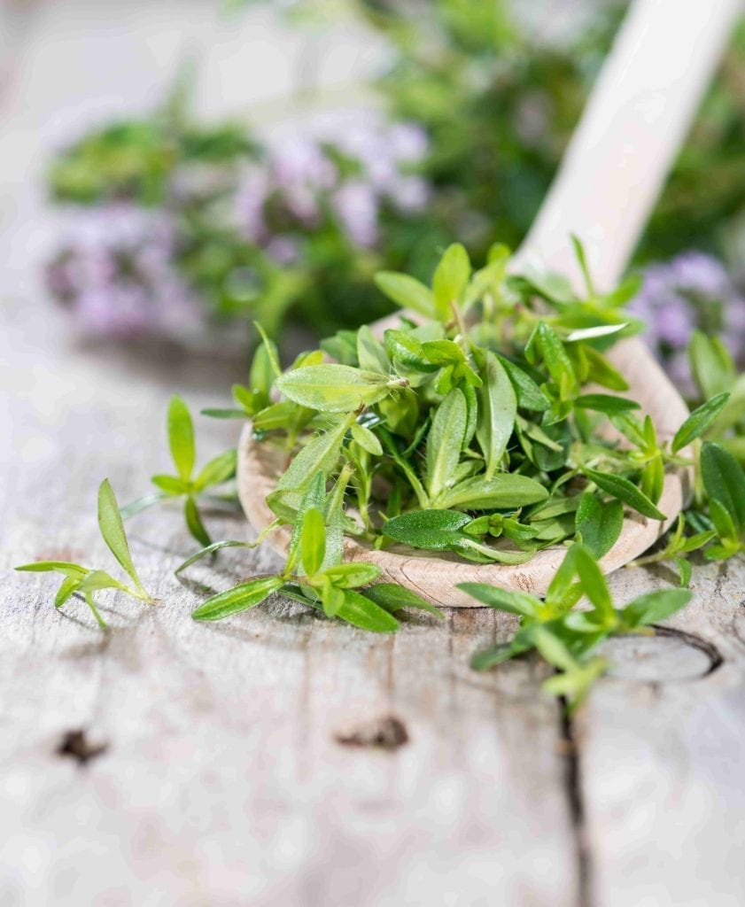 herb to plant winter savory plant with wooden spoon