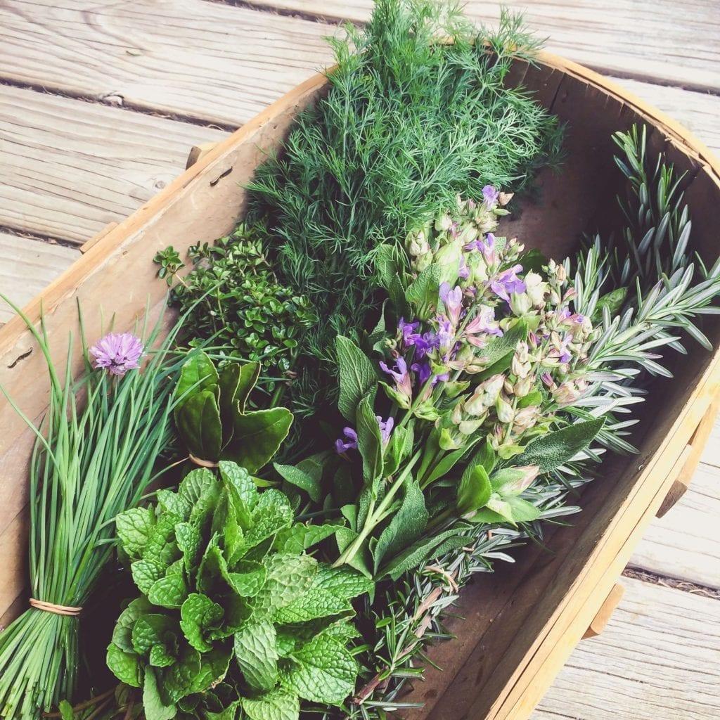 fresh herbs in rustic wood bowl