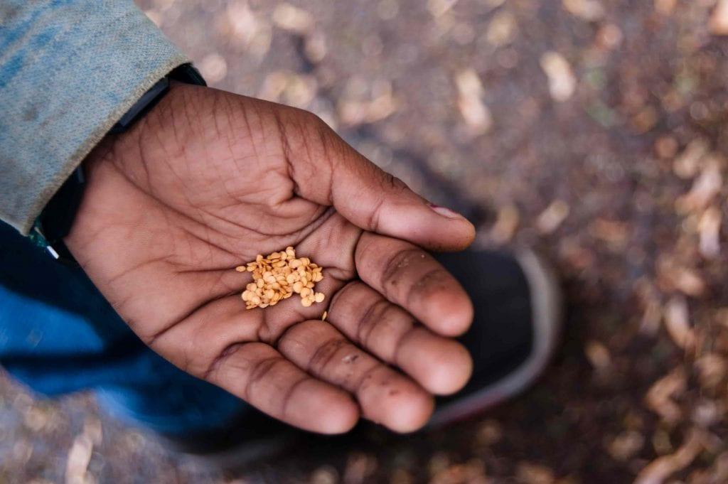 hand holding vegetable seeds for planting vegetable garden