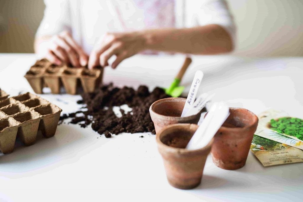 small pots, seed starting potting mix, markers Starting Seeds for vegetable garden