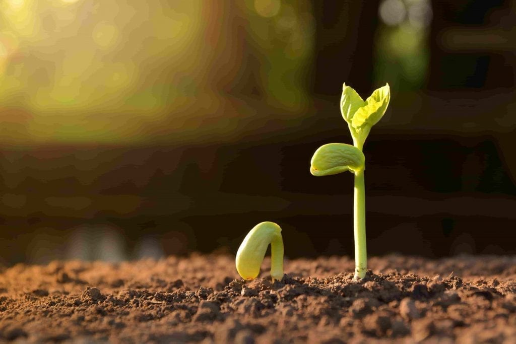 vegetable seedling growing-seedling-in-soil-under-sun-light-